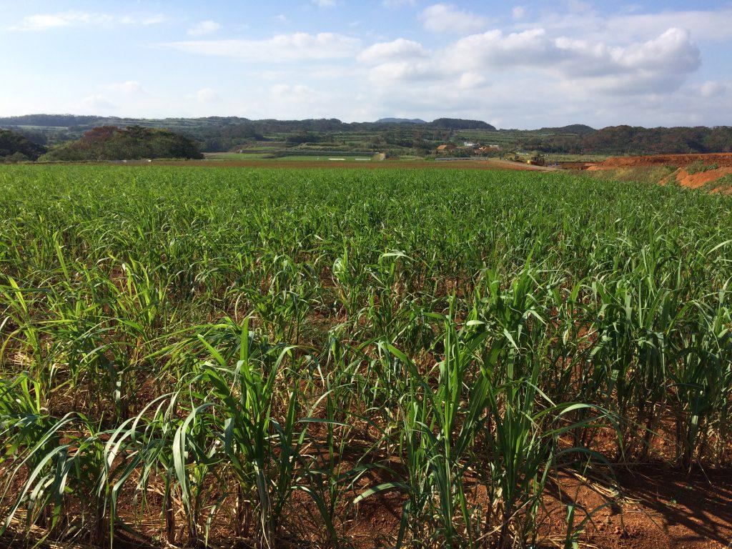 徳之島におけるサトウキビ農業のIoT化によるスマート農業プロジェクト